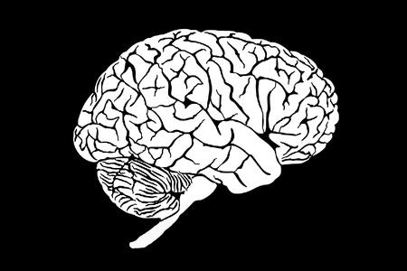 brain Stock Photo - 11581575