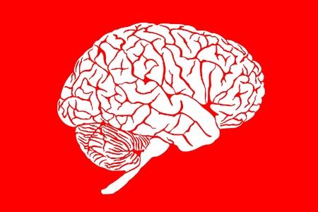 brain Stock Photo - 11581578
