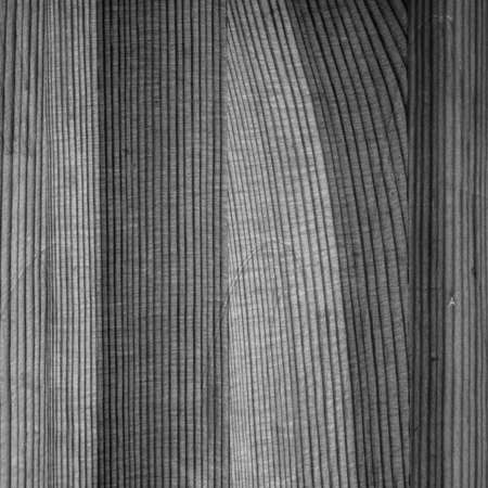treated board: square black and white picture treated wood composite board image of the tree structure
