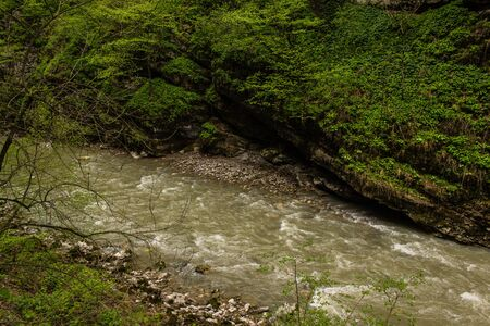 murmur: mountain river with rapid current surrounded by green vegetation