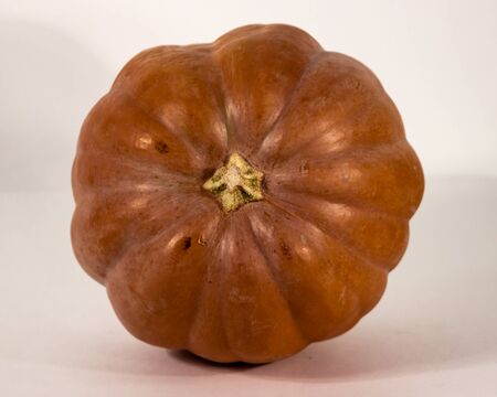 large pumpkin: Large ripe pumpkin