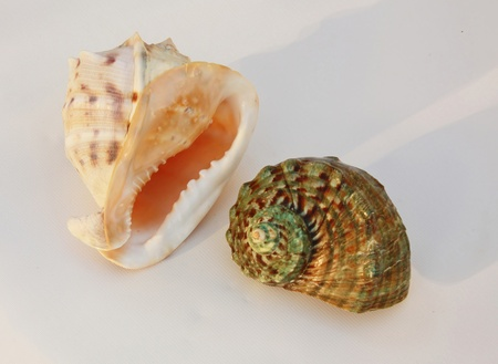 Shells of tropical seas � of the yellow and green color against a black background  photo