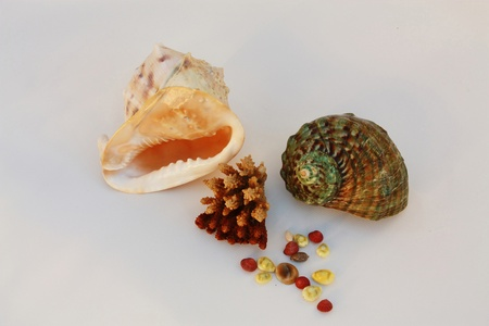 Shells of tropical seas – of the yellow and green color against a black background photo