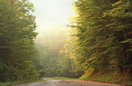 Local road in relict caucasian mountain forest in morning time Stock Photo