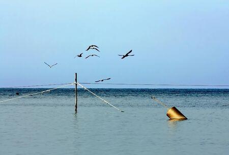 boyas: Las aves marinas que vuelan sobre la redes de pesca y boyas Foto de archivo