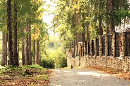 Road with pine on the side leads down Stock Photo