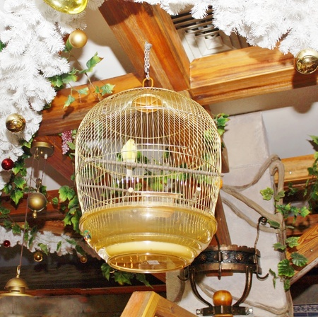 Yellow parrot in a cage under the ceiling on a background of christmas decorations