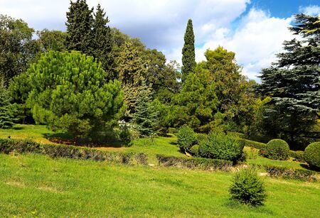 subtropical: Trees, bushea, cypress trees  and other plants in the subtropical park