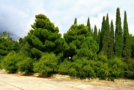 cypress: Trees, bushes, cypress trees  and other plants in the subtropical park Stock Photo