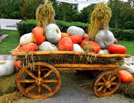 fortified: Red and white pumpkins on a wooden cart with straw