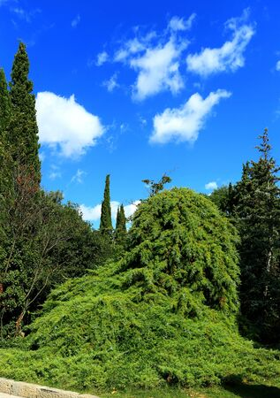 cypress: Plants, palm trees and cypress in the subtropical park Stock Photo