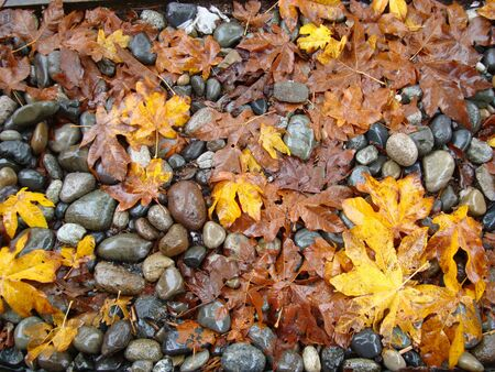 ground cover: Wet leaves and rocks ground cover