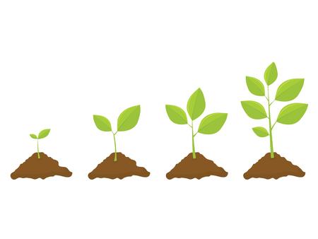 Growing Plant Set