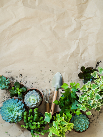 Composition of gardening tools with succulents and ivy in pots on rumpled craft paper. Stock Photo