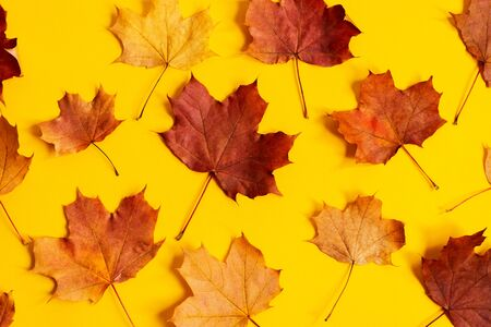 Flat lay of nature pattern colorful autumn leaves on yellow background. Seasonal concept. Creative season layout. Standard-Bild