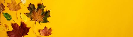 Flat lay of nature colorful autumn leaves on yellow background. Seasonal concept. Creative season wide banner layout.