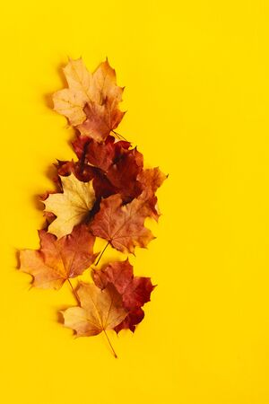 Autumn composition with bright maple leaves on a yellow background. Seasonal concept mockup. Creative season layout. Standard-Bild