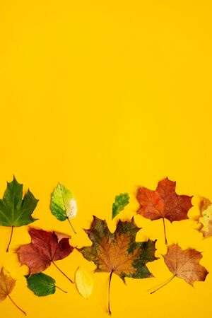 Flat lay of nature pattern colorful autumn leaves on yellow background. Seasonal concept. Creative season layout. Standard-Bild - 130061622