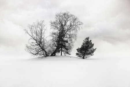 Silhouette of grove of trees in winter photo