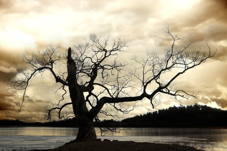 Silhouette of bare tree against sepia sky Stock Photo - 8175183