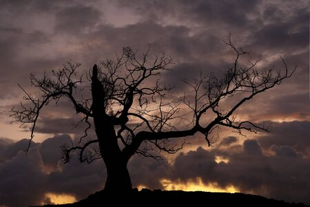 eerie: Silhouette of tree Stock Photo