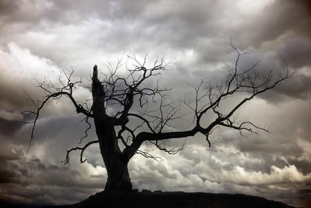 arbre mort: Silhouette d'arbre nu avec le ciel nuageux Banque d'images