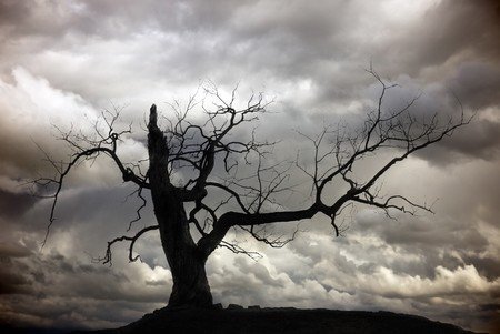 Silhouette of bare tree with cloudy sky Stock Photo