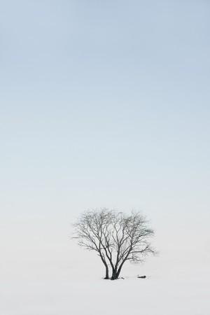 Single tree in winter landscape Stock Photo - 8175123