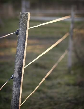 elektrischer Zaun: Close up Electric-fence im Abendlicht