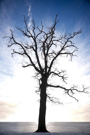 silhouette of bare tree against blue sky Stock Photo - 8172246