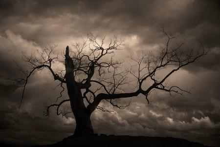 woodland  horror: Silhouette of bare tree against sepia sky