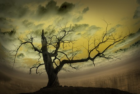 Abstract picture with bare tree and yellow background photo