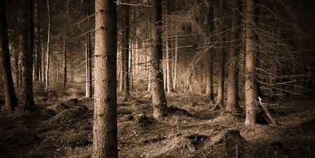 Spooky forest witjh dry trees in sepia photo