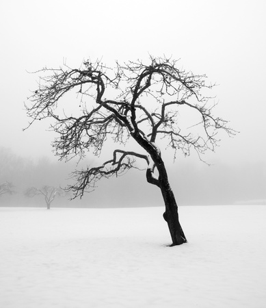 barren: Bare tree in a snowstorm