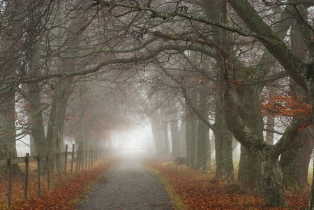 Footpath on an early misty morning in the fall photo