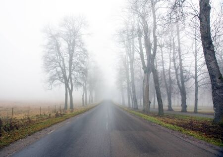 Country avenue on a foggy day photo
