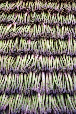 Green aspargus in neat rows photo