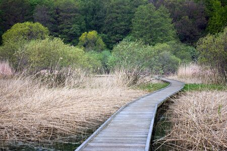 Wooden foortpath in a swamp area with reeds trees in yhe background Stock Photo - 8305148