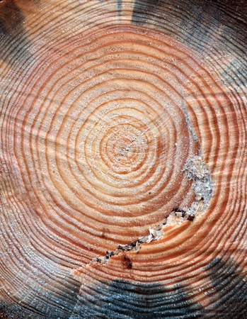 Close up of the surface of old cut of tree with annual rings photo