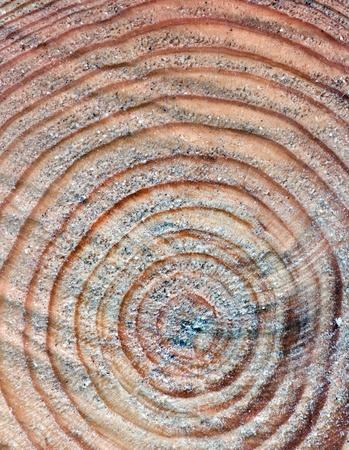 old macro: Close up de tronco de �rbol de cuna con rinfs anual