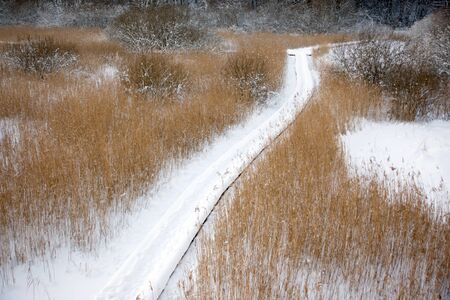 Snow covered footpath over a swamp with reeds Stock Photo - 8305197