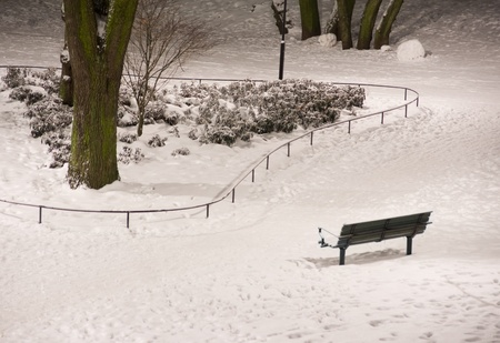 Bench in snow in a park at night photo