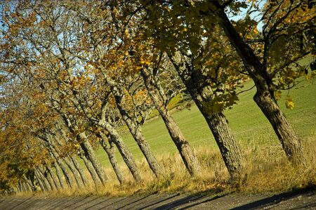 a row of trees along a a smalll dirt road Stock Photo - 8305164