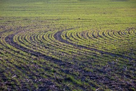 Cultivated field in the early spring photo