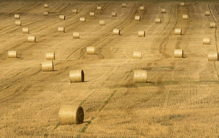 Hay bales on a field photo