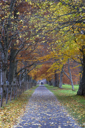 walking path: walking path in autumn