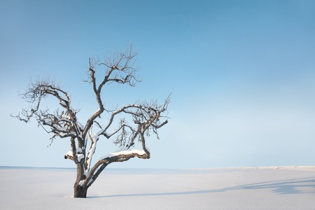 Bare tree with snow against bright clear blue sky photo