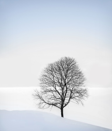 Bare tree in front of a field in winter photo