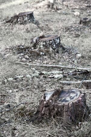 deforested: Tree stumps in a deforested area