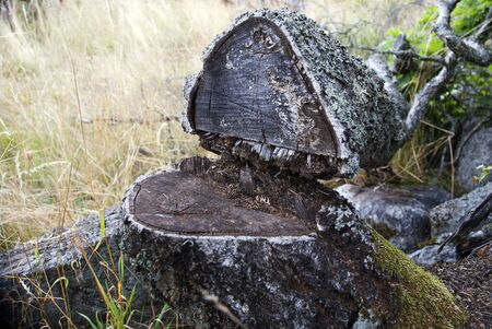 Close up of fallen tree in forest photo